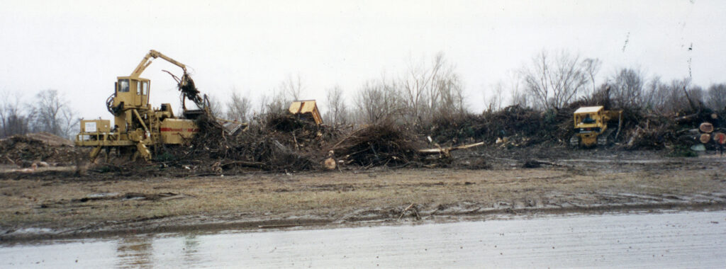 Tree piles waiting to be shredded